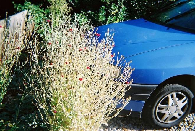 Car in the bush